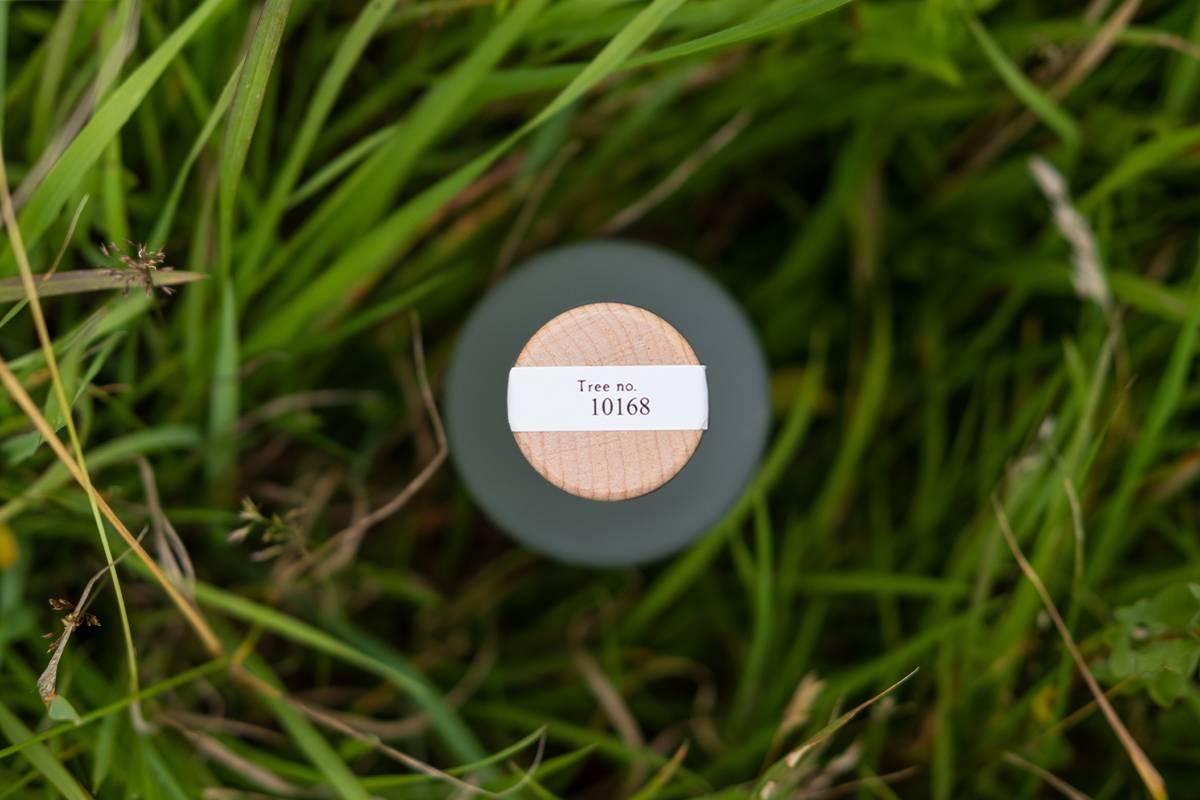 An image of grass